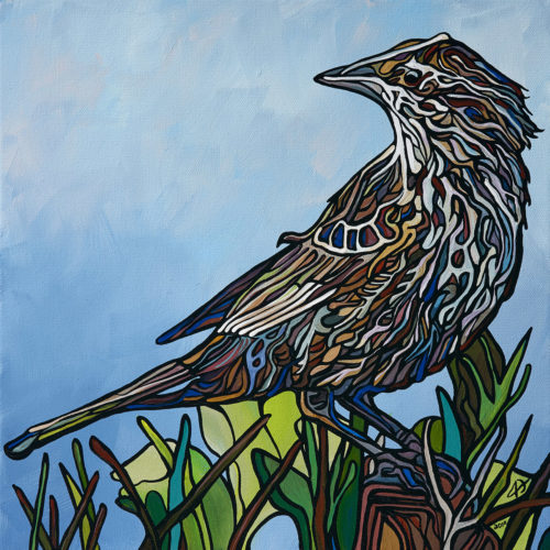 169 Red Winged Blackbird p